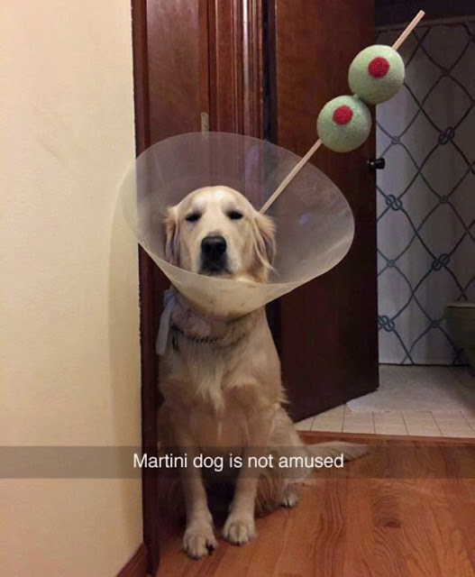 Funny Martini Dog Is Not Amused Snapchat Meme Picture