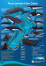MARINE MAMMALS OF NEW ZEALAND