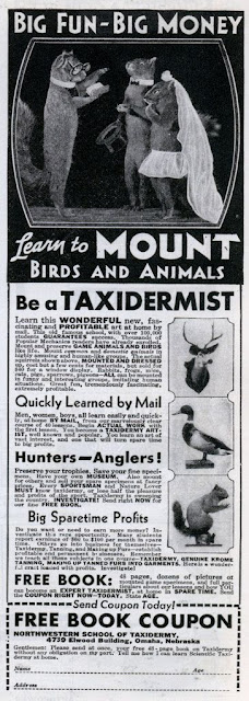 Taxidermist - Learn to mount birds and animals