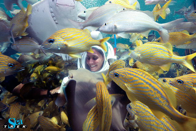 Sea TREK surrounded by fish
