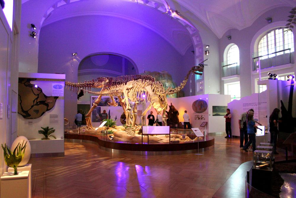 Eläinmuseo