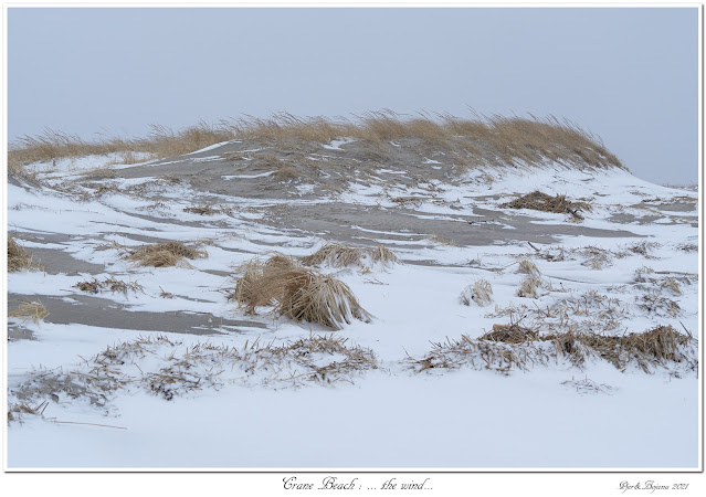 Crane Beach: ... the wind...