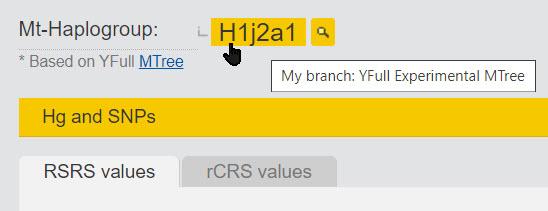 branch of YFull mtDNA tree