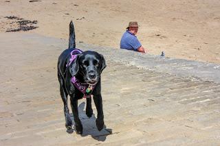 Black labrador running up a slipway from a sandy beach.