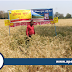 Shriram Super 111 Wheat Seed increases yield of wheat for farmers in Madhya Pradesh