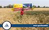 Shriram Super 111 Wheat Seed increases yield of wheat for farmers in Madhya Pradesh