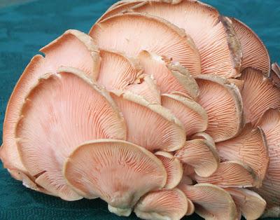 Mushroom Supplier Company in Thane