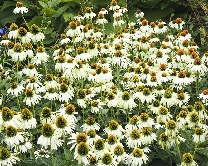 Kew Garden's, Garden Inspiration | LONDON MUMMA