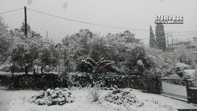 Χιόνισε στα ορεινά της Αργολίδας - Εικόνες από Καρυά και Αραχναίο που ντύθηκαν στα λευκά (βίντεο)