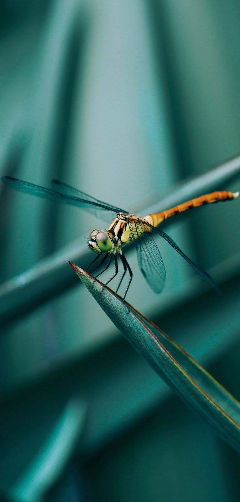 Picture of a dragonfly.