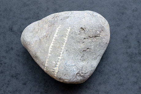 Worm Fossil © Graeme Walker / Pebble Museum 2019