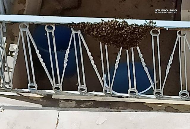 Τρομοκρατήθηκαν ένοικοι σε οικία στο Ναύπλιο - Ολόκληρο μελίσσι εγκαταστάθηκε στο μπαλκόνι τους (βίντεο)