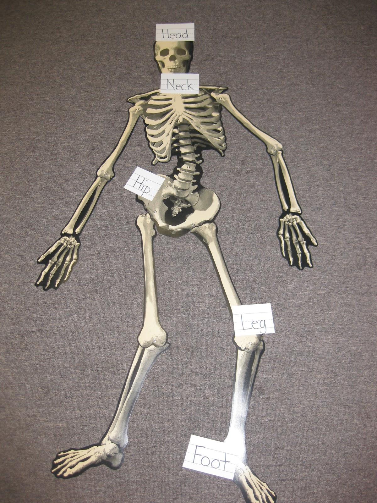 Mrs Albanese S Kindergarten Class Dem Bones