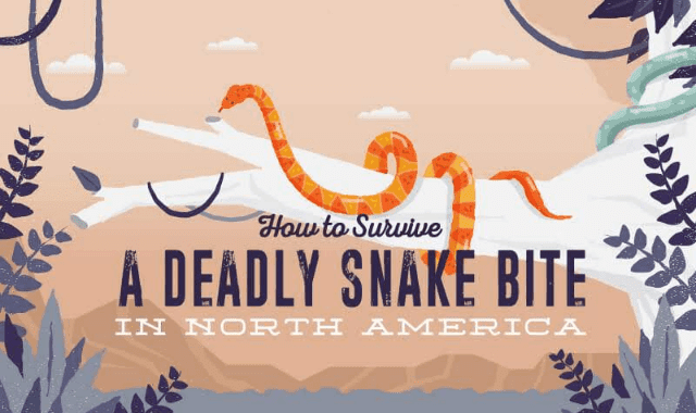 How To Survive a Deadly Snake Bite In North America