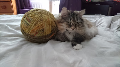 Giant ball of yarn next to long haired calico cat on bed