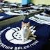 В Турции кошек туристов ждет пятизвездочный отель