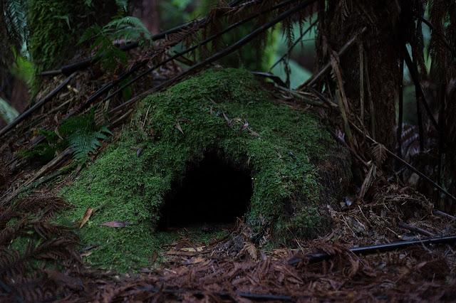 أجمل الكهوف في الغابة وخلفيات