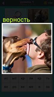 собака языком облизывает хозяина проявляя свои чувства и верность