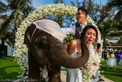 Elephant liked the bride