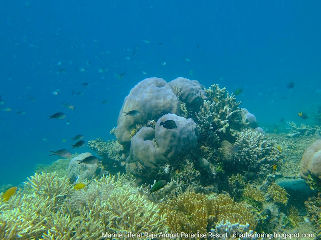 Snorkeling or freediving picture from Waigeo island