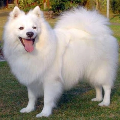 Best Indian Dog breeds