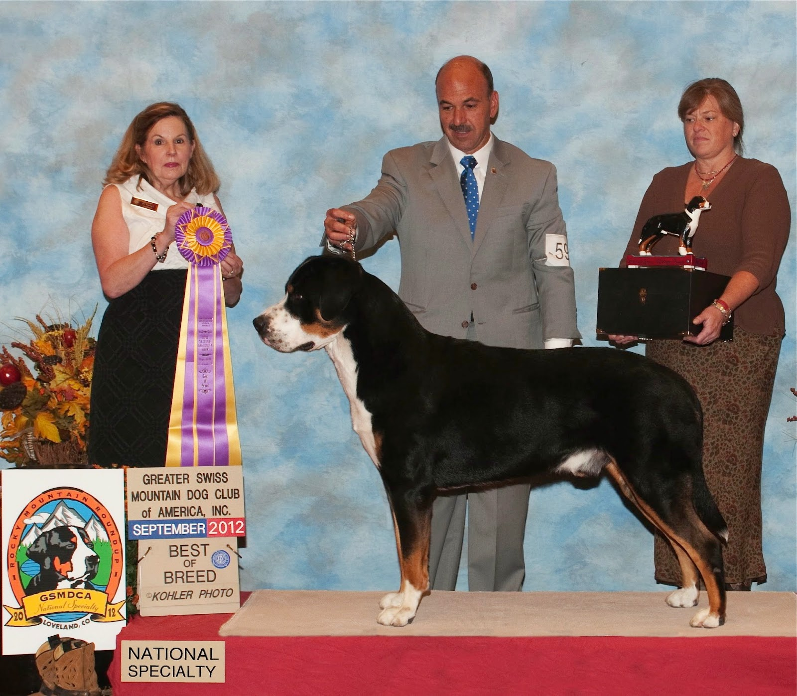greater swiss mountain dog club of america - HD 1600×1397