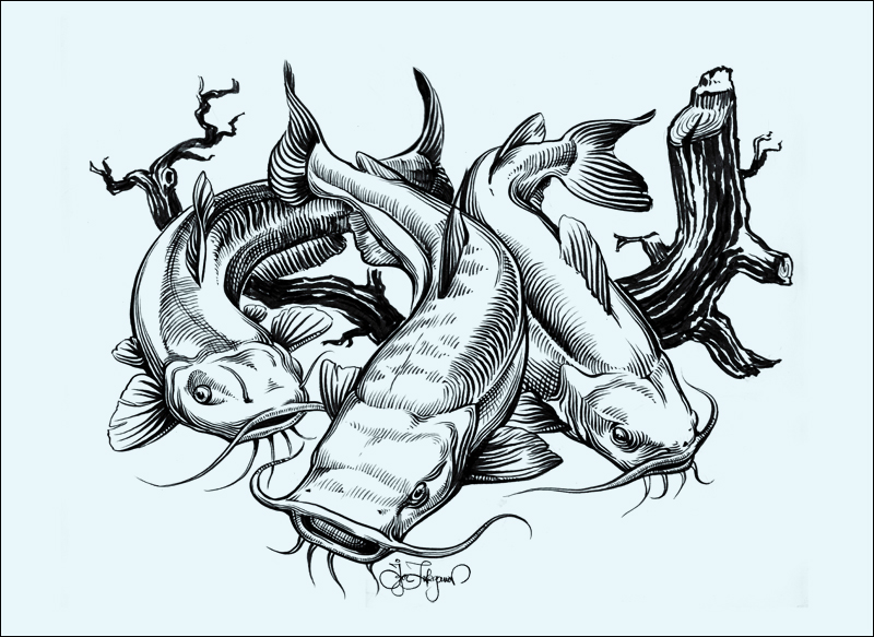 Drawing For The Us Catfish Association