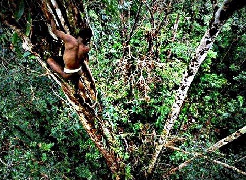 Jaga Hutan Papua untuk Keberlanjutan Budaya Masyarakat Adat