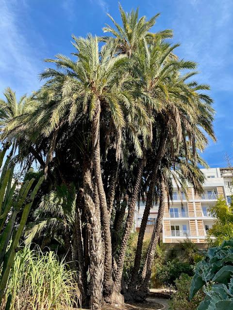 Palm trees in the Botanic Gardens, Valencia, Spain