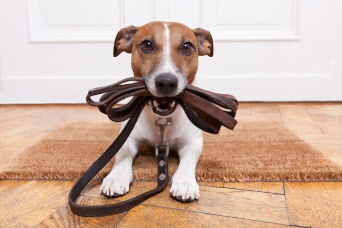 Best Dog Leash Training Tips - 08 Simple Steps
