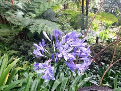 jardim tropical garden Monte Palace flowers