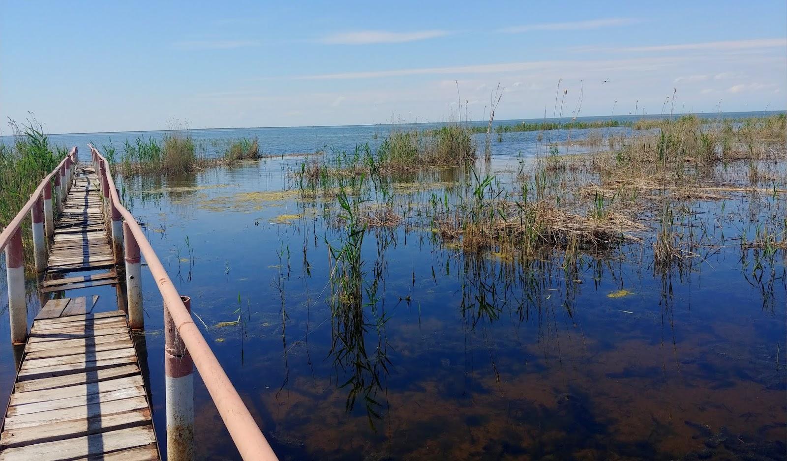 Rezerwat Korgalzhyn – flamingi kontra komary