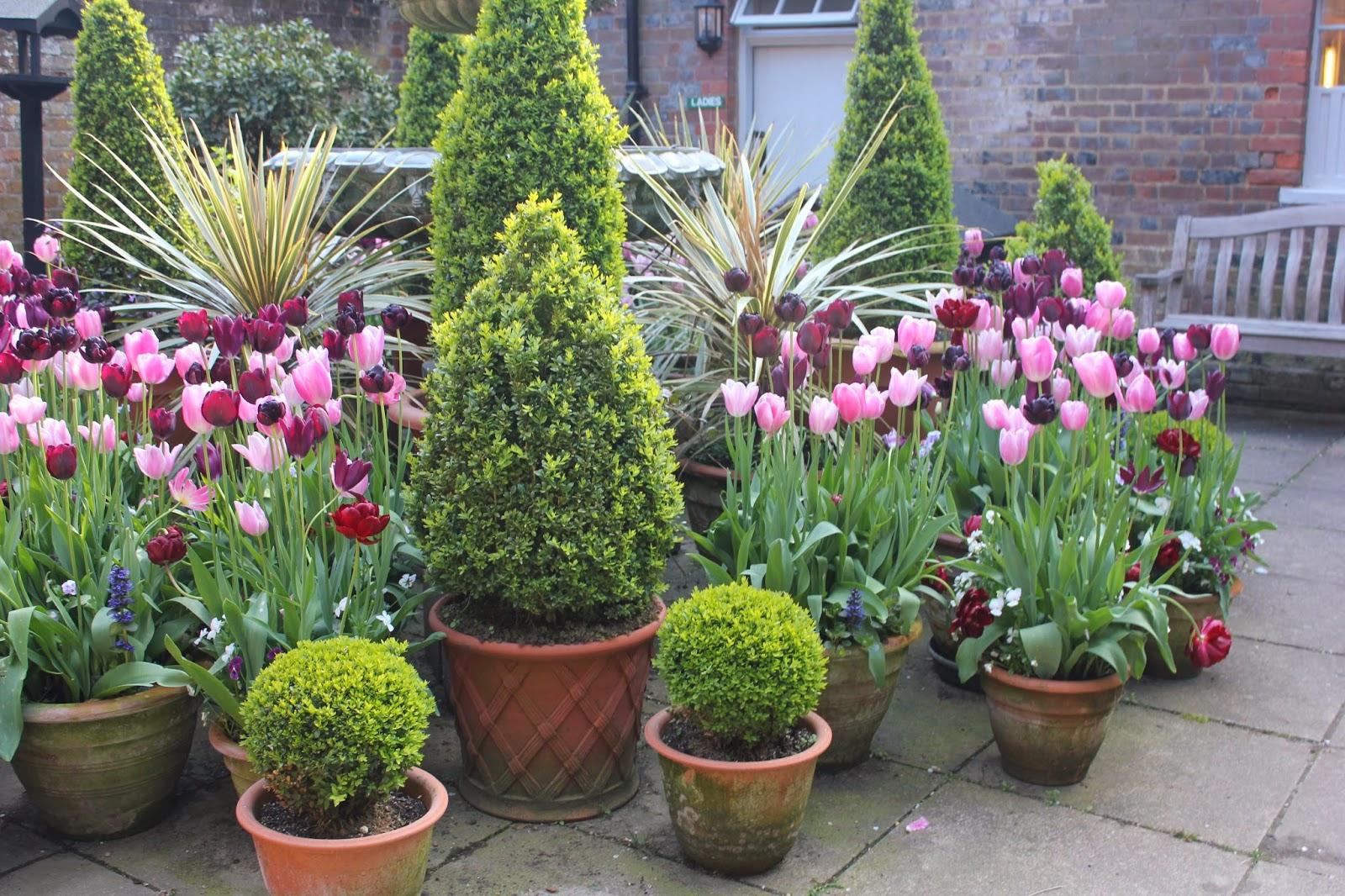 Plante tulipaner om våren