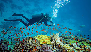 di Raja Ampat inilah Anda bisa menemukan ada surga terindah di dunia yang pastinya tidak akan ditemukan di alam bawah laut di daerah lain di Indonesia.
