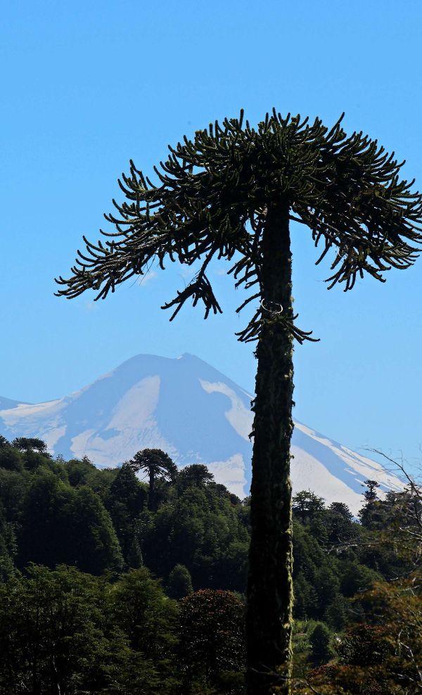 La zona de Icalma, en La Araucanía Andina