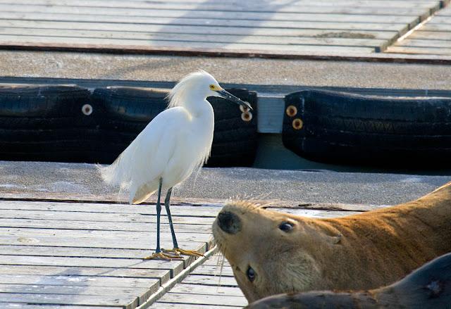 Bait dock buddies