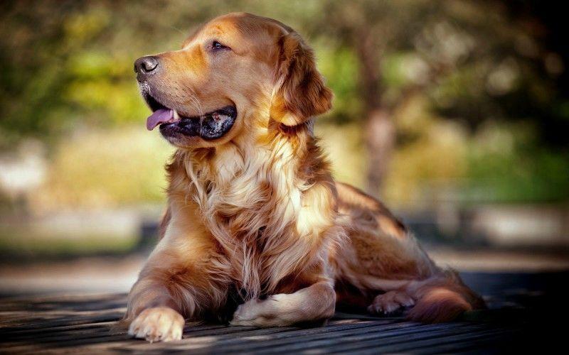 Πως θα μάθουμε τον σκύλο μας να μην τρώει ότι βρει;