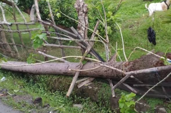 Pohon Tumbang Rusak 400 Meter, Kabel Jaringan PLN Di Bontomanai