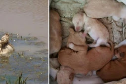 Kayakers See Potato Bag Floating In River And Hear Whimpering Puppies Inside