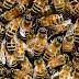 Inhambupe: Idoso encontrado morto pode ter sido vítima de ataques de abelhas