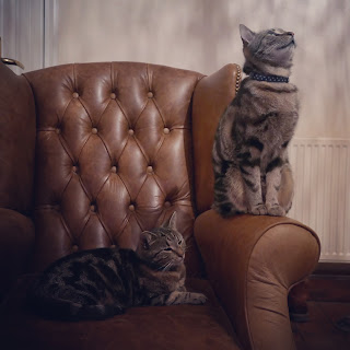Two tabby cats in a brown leather chair