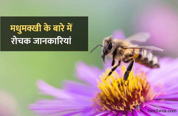 madhumakkhi-honey-bee-in-hindi