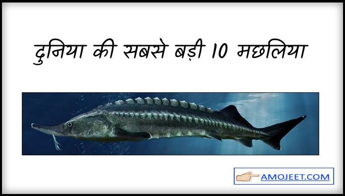 दुनिया की सबसे बड़ी 10 मछ्ली