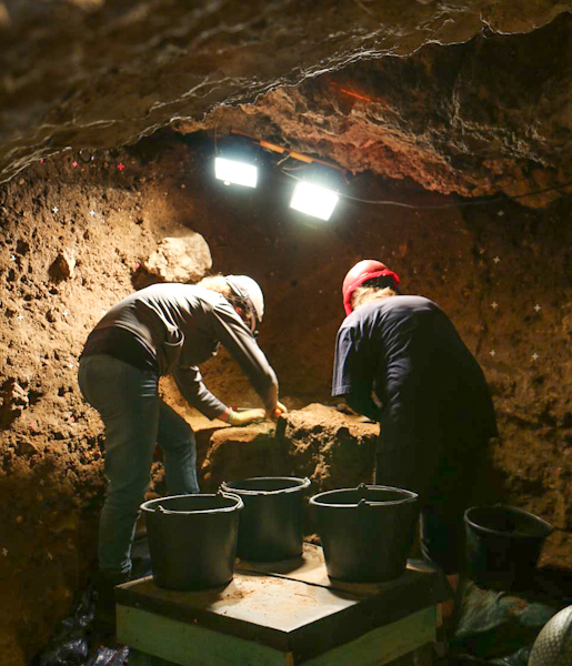 Archeological dig in Europe researching early domestic cats (believed)