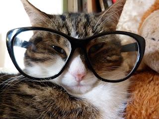 ¿Podemos entender lo inteligentes que son los gatos?