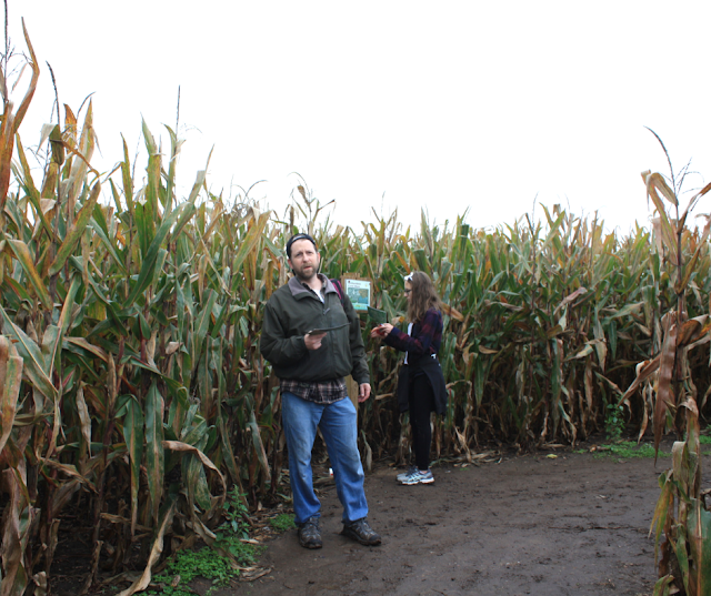Figuring out our next direction in the Richardson Corn Maze.