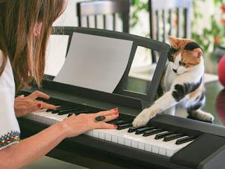 ¿A los gatos le gusta cuando les cantas?