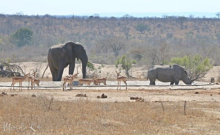 Nwaswitshaka-Waterhole-Road-Kruger