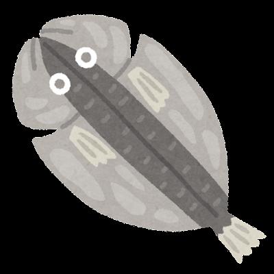 魚の開きのイラスト
