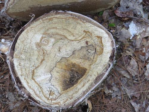 pattern in a cut log